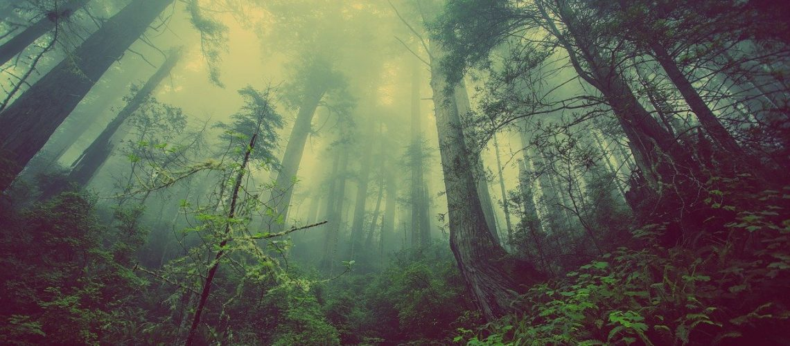 forest, mist, nature, niebla